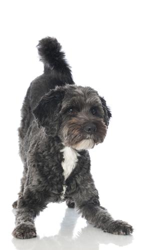Goodog-dog-training-elanora-heights