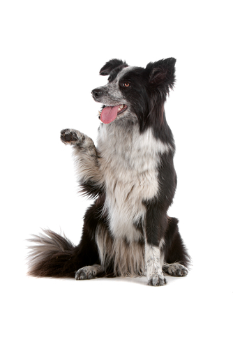 dog-trick-training-workshop-elanora-heights